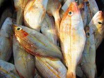 Серия свежих рыб Стоковые Изображения