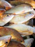Серия свежих рыб Стоковое Фото
