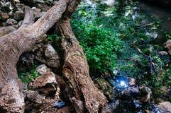 Серия Святой Земли - горы Иудея - весна 2 Ein Tanur Tanur стоковая фотография rf