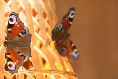 серия ссоры бабочки Стоковые Изображения RF