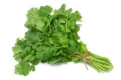 серия травы кориандра cilantro Стоковое Изображение RF