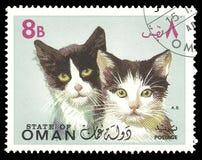 Серия фауны, животных, котов Стоковое фото RF