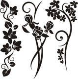 серия флористического орнамента Стоковая Фотография