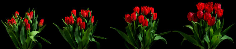 Серия цветка тюльпана стоковое фото rf