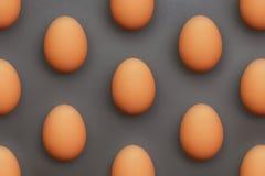 серия яичек Стоковое Изображение RF