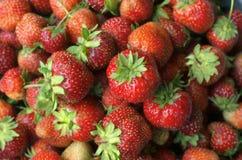Серия ярких красных зрелых ягод клубники Стоковое Изображение RF