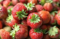 Серия ярких красных зрелых ягод клубники Стоковая Фотография