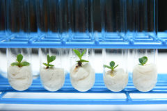 Серия 1 биотехнологии завода стоковые изображения rf