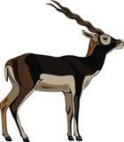 серия blackbuck антилопы иллюстрация вектора