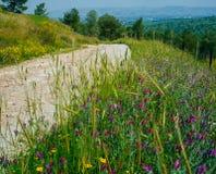 Серия Holyland - гад Hill6 стоковое фото rf