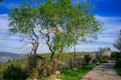 Серия Holyland - Иудея mountains#2 стоковые фотографии rf