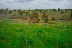 Серия Holyland - пустыня в blossom#2 стоковое фото