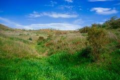 Серия Holyland - пустыня в blossom#3 Стоковая Фотография