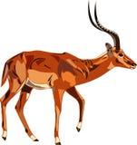 серия impala антилопы бесплатная иллюстрация
