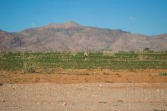Сернобык в пустыне и гора благоустраивают около пасьянса, Намибии Стоковые Изображения