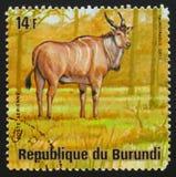 Сернобык Taurotragus антилопы Eland, животные Бурунди серии, около Стоковые Фотографии RF