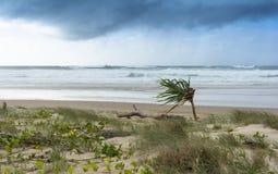 Серое облачное небо и бурный океан на пляже перед штормом с сиротливой пальмой, заливом Австралией Байрона Стоковая Фотография RF