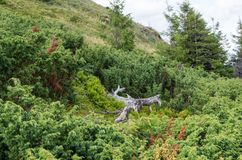 Серое сухое дерево среди зеленых цветов Мертвое дерево Смерть и жизнь Стоковые Изображения