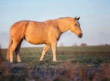 Серое portait лошади в природе леса осени, смотря Стоковое Фото