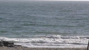 Серферы на волнах пляжа улавливая молой утеса акции видеоматериалы