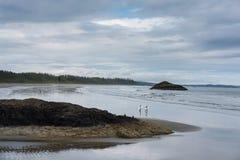 Серферы на Tofino, Канаде стоковое фото rf