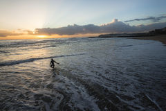 Серфер входит в восход солнца океана Стоковые Фотографии RF