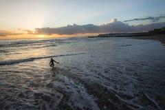 Серфер входит в восход солнца океана Стоковое Изображение RF