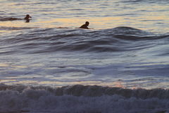 Серфер в Сан-Франциско приземляется конец Стоковые Изображения RF