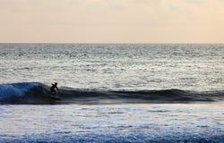 Серфер на голубой океанской волне в Бали Стоковое Фото