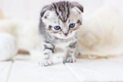Серые игры котенка Стоковые Изображения RF