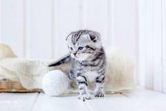 Серые игры котенка Стоковое Фото