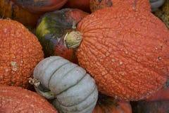 Серые и ухабистые оранжевые тыквы интересуют если они будут юркнуты прочь как Золушка Стоковая Фотография RF