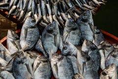 Серые кефали на красном подносе на торговце рыб стоковые изображения rf