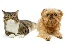 Серые кот и собака лежат совместно Стоковые Фотографии RF