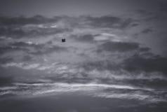 Серые небеса и скопа стоковое изображение