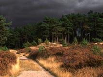 Серые облака над лесом Стоковые Изображения