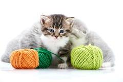 Серые пушистые милые киски и один коричневый striped прелестный котенок играют с оранжевыми и зелеными шариками пряжи в белизне Стоковое фото RF
