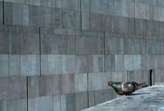 Серые цвета Стоковая Фотография RF