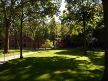 Серые цвета Hall и Matthews Hall, двор Гарварда, Гарвардский университет, Кембридж, Массачусетс, США Стоковая Фотография