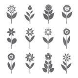 Серые цветки и листья также вектор иллюстрации притяжки corel Стоковое Изображение RF