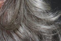 Серые люди волос Стоковое Изображение RF