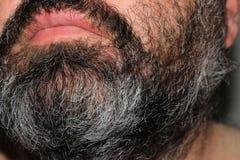 Серые люди волос Стоковые Фотографии RF