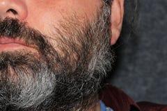 Серые люди волос Стоковая Фотография