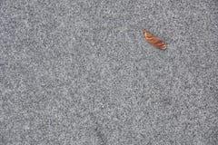 Серый асфальт с лист Стоковое фото RF