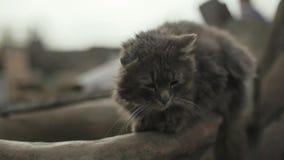 Серый бездомный кот сидя на деревянной загородке Сонный кот сидя на деревянной загородке Серый ленивый кот отдыхая на сток-видео