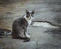 Серый белый кот сидя на мостовой Бездомный грустный мечтательный сиротливый случайный кот на предпосылке асфальта Наблюдать стоковые изображения
