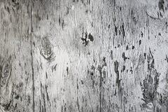 серый вал стоковая фотография
