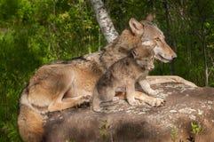 Серый волк (волчанка волка) и ее щенок ослабляют на утесе Стоковое фото RF