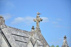 Серый голубь на кресте кладбища Стоковые Изображения