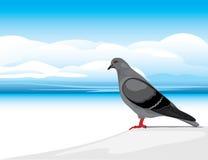Серый голубь на предпосылке skyscape Стоковое Изображение